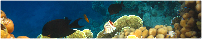 Scuba Diving and Snorkeling Cayo Santa Lucia